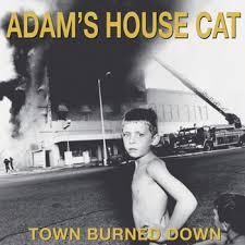 adams house cat